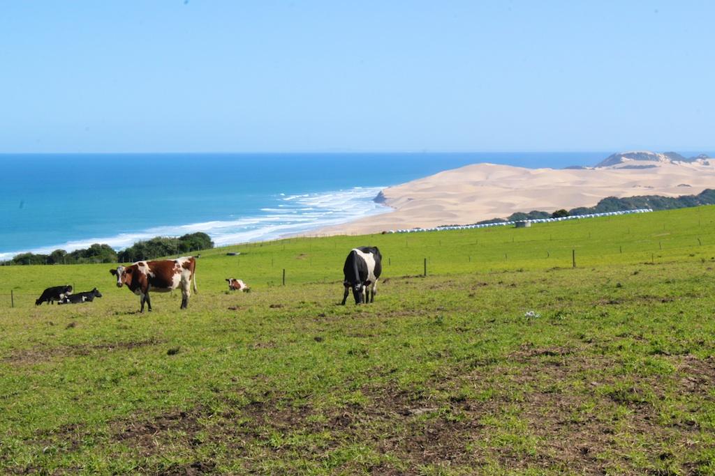 Beach and farm land