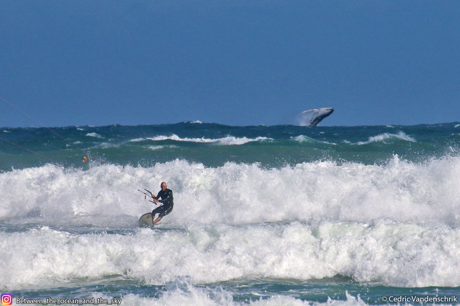 The kiter and the Whale