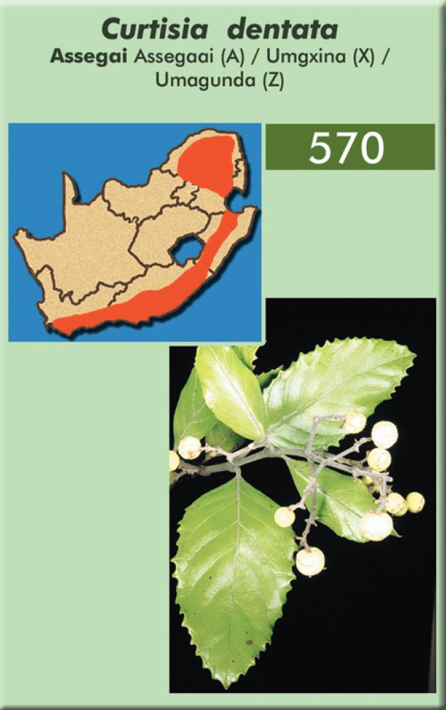 Asse chARTgai tree protected